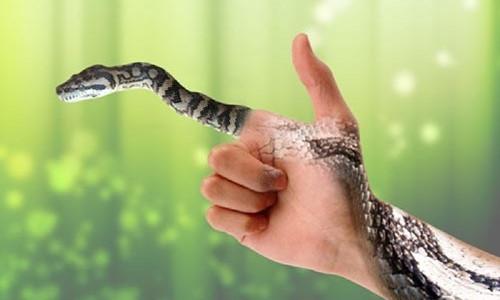 Mơ thấy rắn điềm báo điều gì