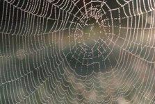 Mơ thấy nhện là điềm báo gì và con số liên quan
