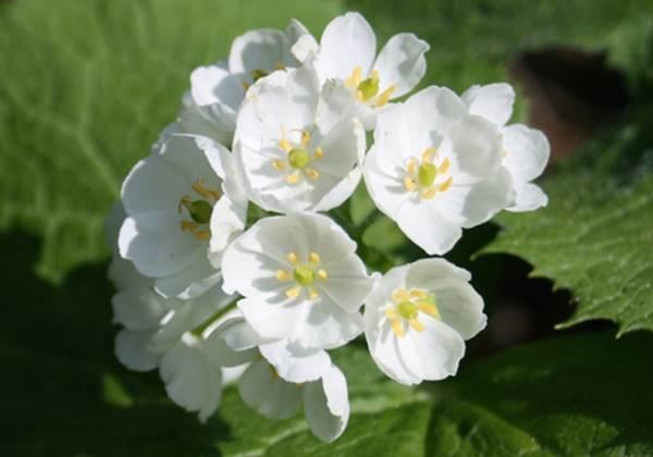 Giải mã nằm mơ thấy hoa màu trắng là điềm gì